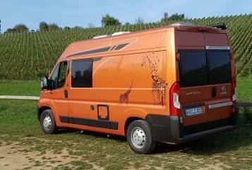 Wohnmobil mieten in Gailingen am Hochrhein von privat | Poessl Terra