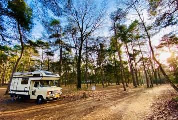 Wohnmobil mieten in Breda von privat | Ford Tropical Safari