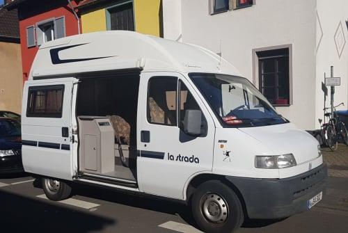 Wohnmobil mieten in Köln von privat | Fiat Ducato Momele